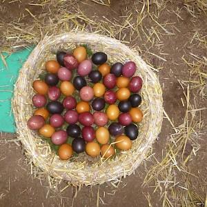 Kunterbunte Eier für