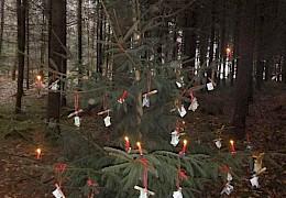 Das Christkindl kam auch im Wald vorbei...